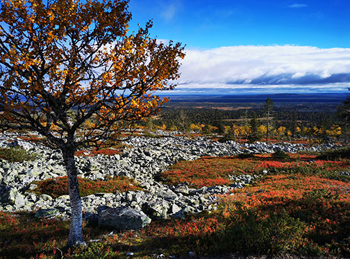 Lapland hill with autumn colors